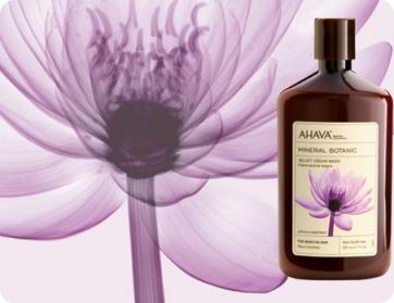 Ahava Velvet Body Lotion Lotus & Chestnut