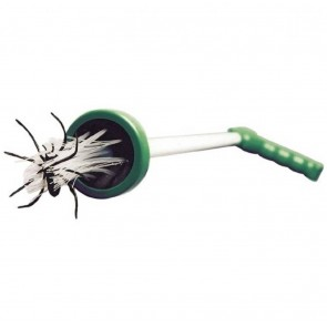 Spinnenvanger, Spinnen, Insecten, Insectenvanger, Groen,